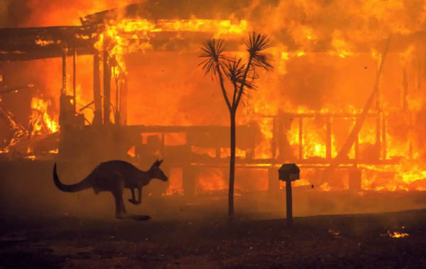 What are the Consequences of Forest Fires (2)