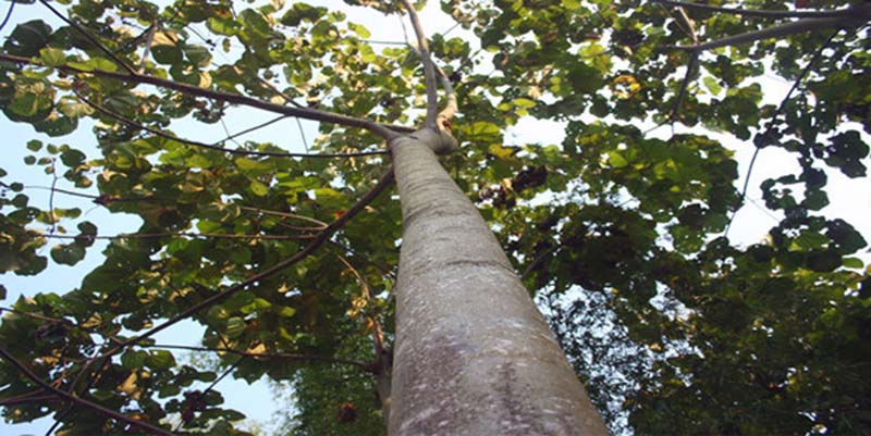 What is the most durable tree (3)