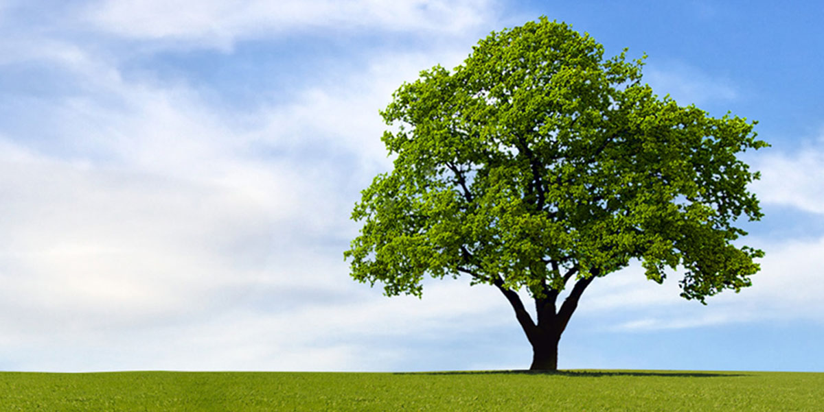 What is the most durable tree